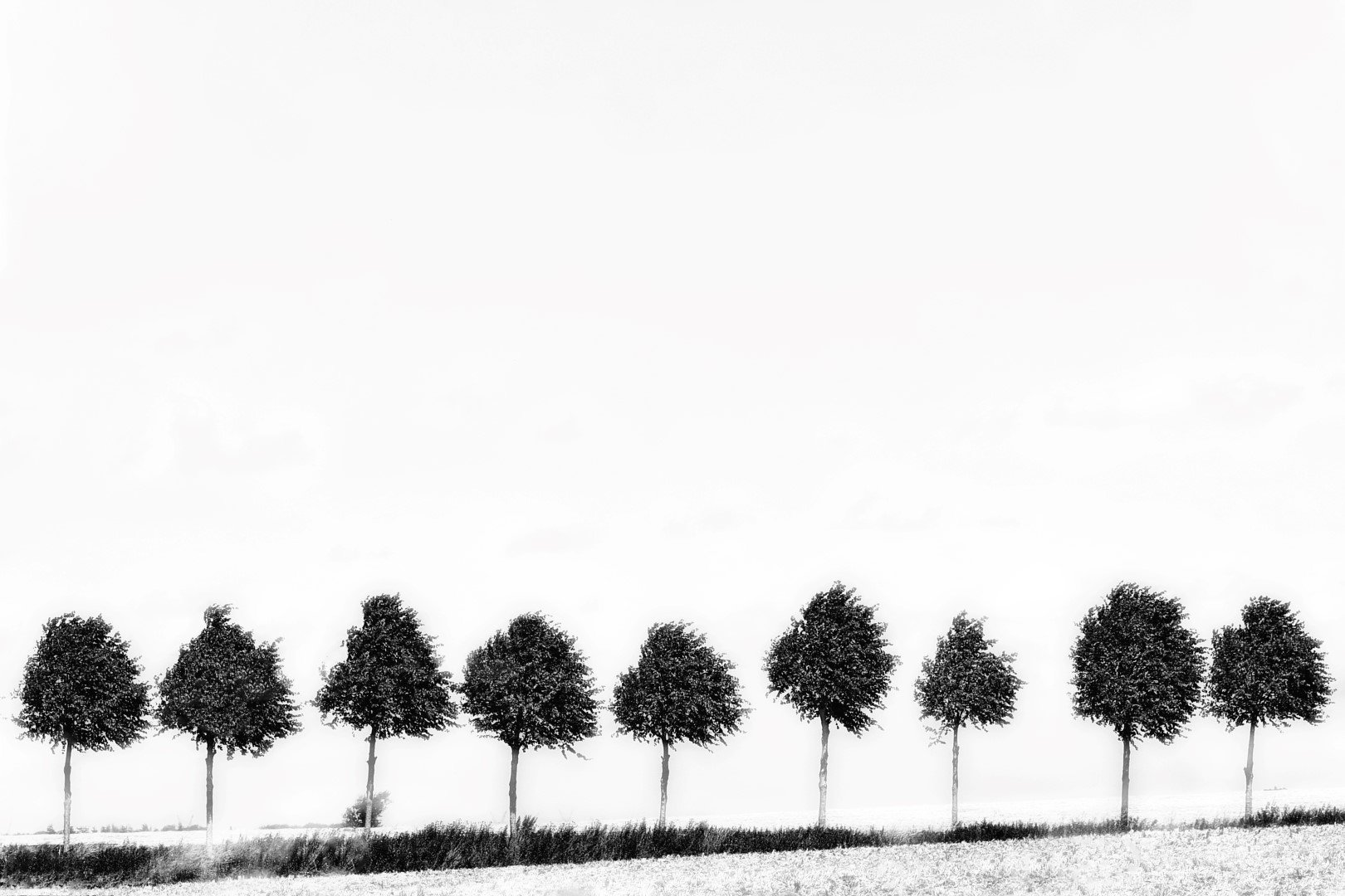 Trees (Large)